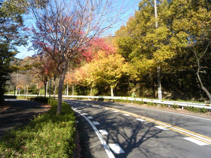 サイクリング日記2014年11月23日 紅葉