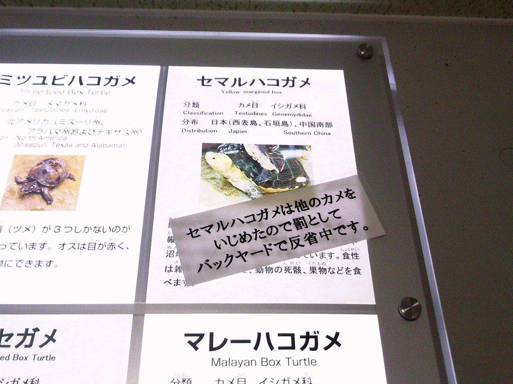 日本平動物園 は虫類館 セマルハコガメ
