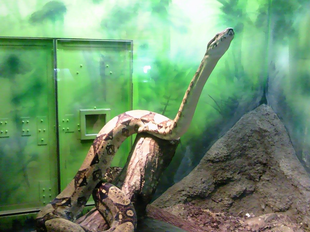 日本平動物園 は虫類館 ボアコンストリクター