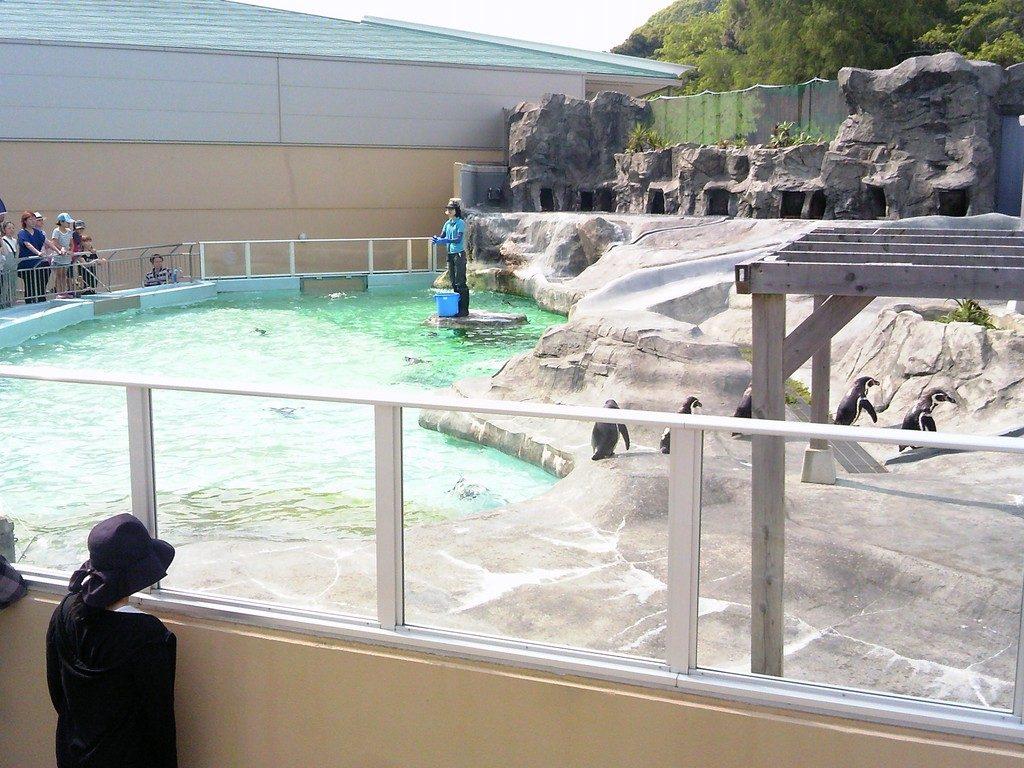 日本平動物園 ペンギン館