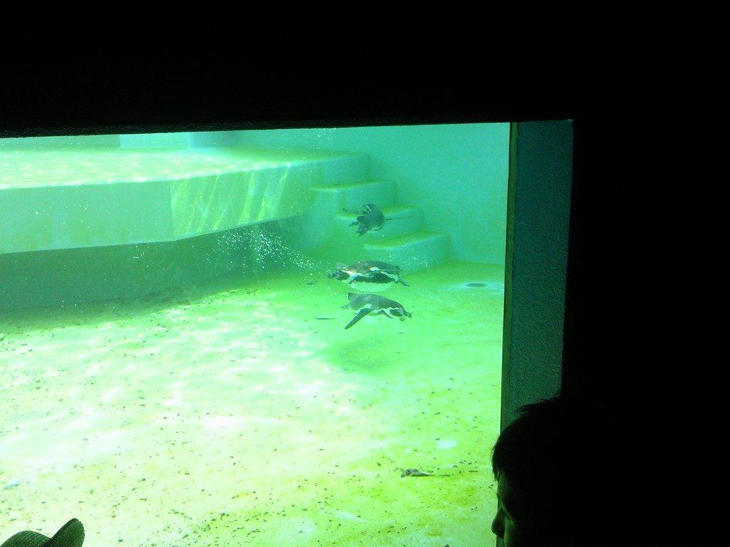 日本平動物園 ペンギン館3