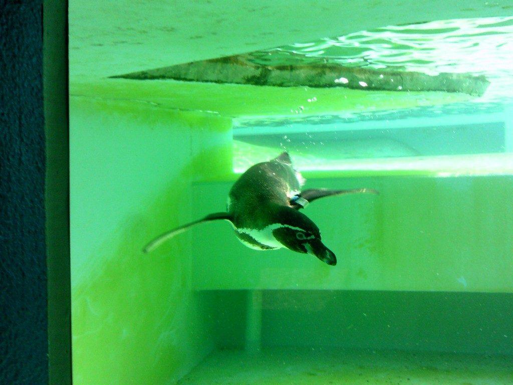 日本平動物園 ペンギン館4