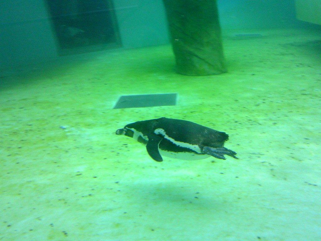 日本平動物園 ペンギン館5