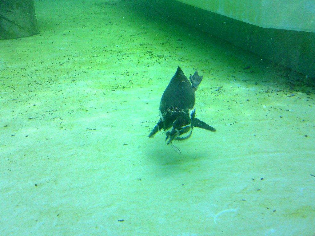 日本平動物園 ペンギン館6