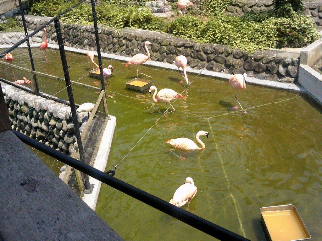 日本平動物園 フライングメガドーム3
