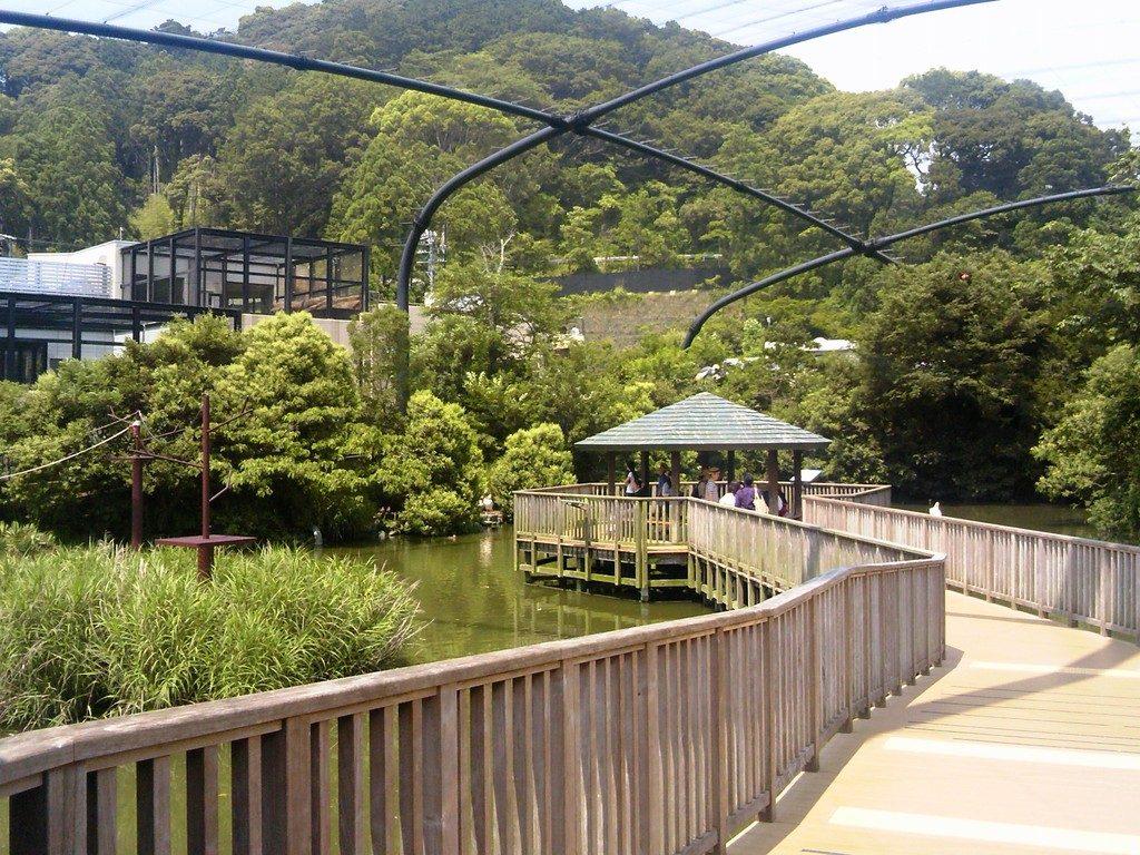 日本平動物園 フライングメガドーム4