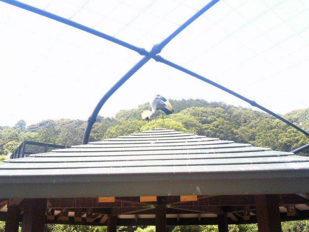日本平動物園 フライングメガドーム5