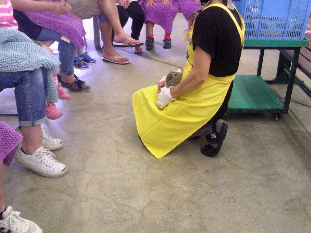 日本平動物園 ふれあい館 モルモット