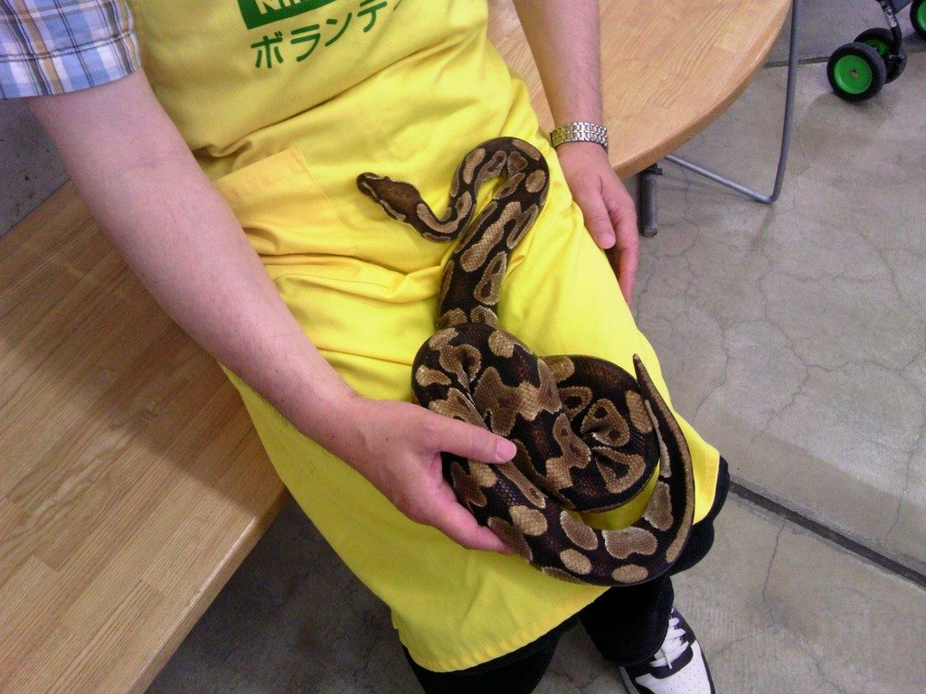 日本平動物園 ふれあい館 蛇