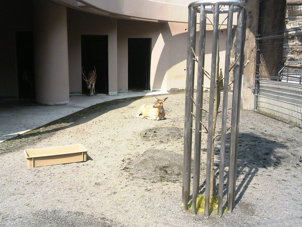 日本平動物園 草食獣舎 アクシスジカ