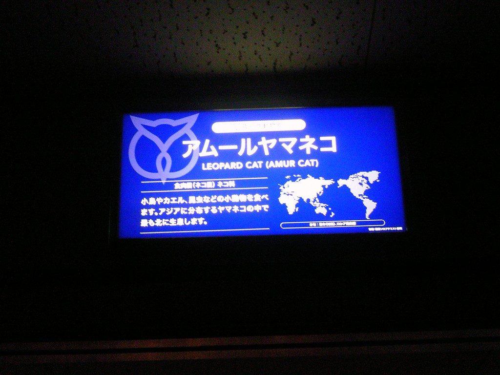 日本平動物園 夜行性動物館 アムールヤマネコ
