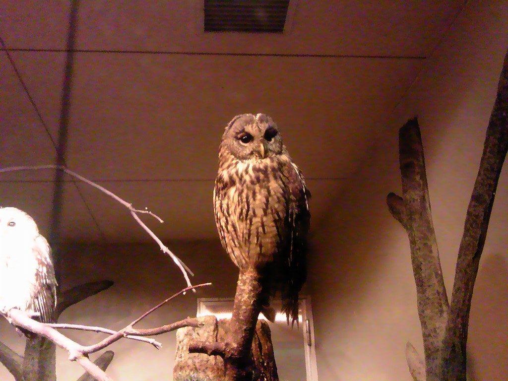 日本平動物園 夜行性動物館 フクロウ
