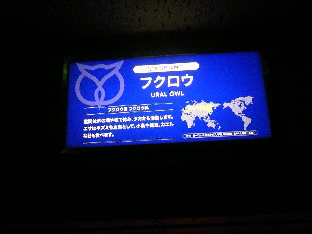 日本平動物園 夜行性動物館 フクロウ2
