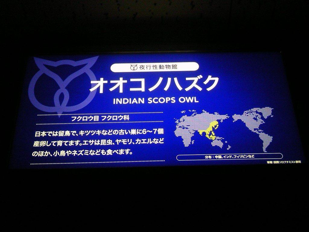 日本平動物園 夜行性動物館 オオコノハズク2