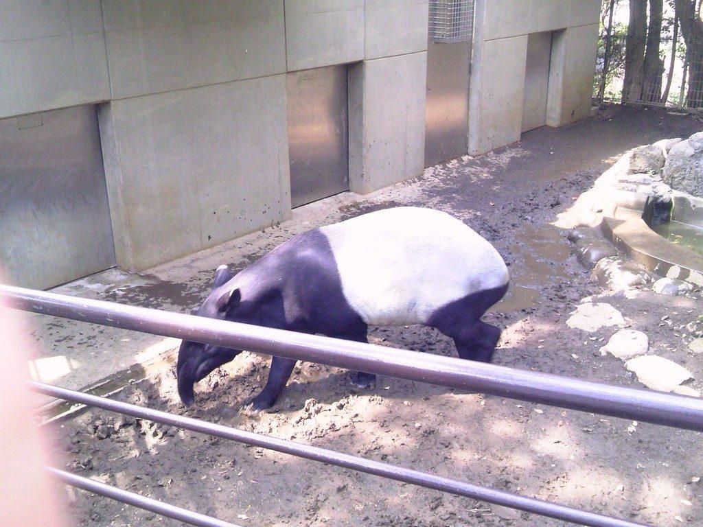 日本平動物園 草食獣舎 マレーバク