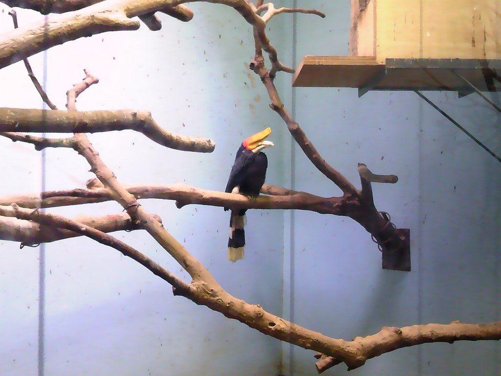日本平動物園 熱帯鳥類館 サイチョウ