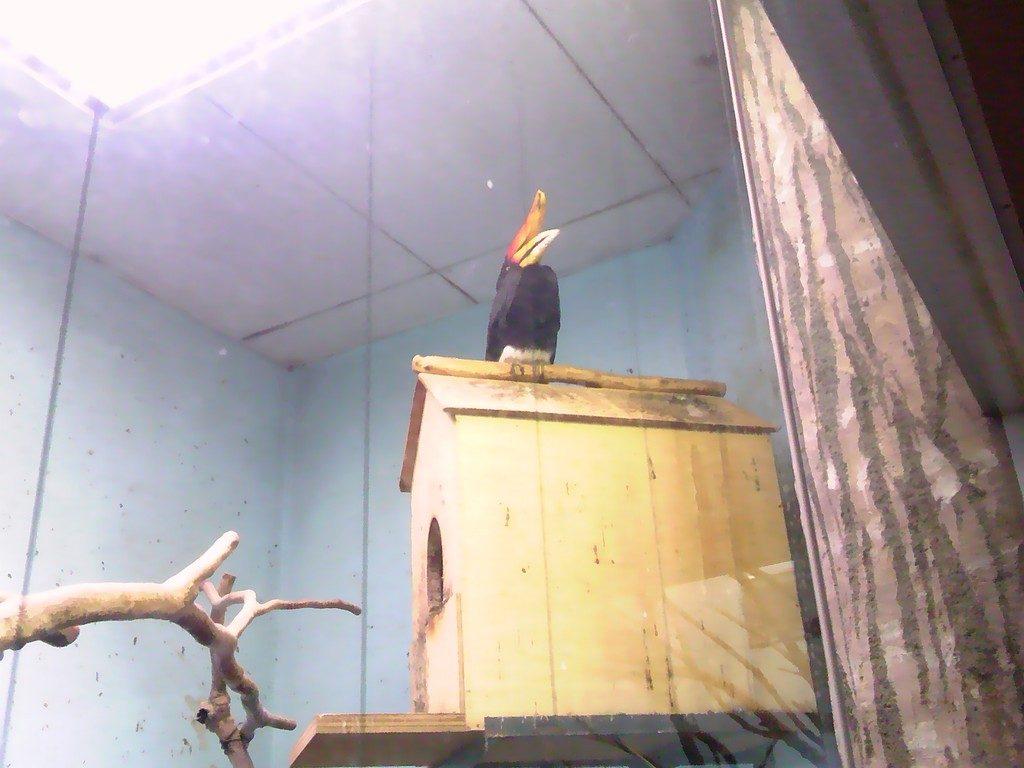 日本平動物園 熱帯鳥類館 サイチョウ2