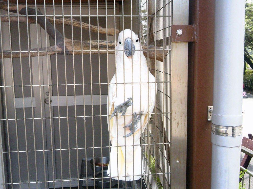 日本平動物園 ふれあい動物園 オオバタン2