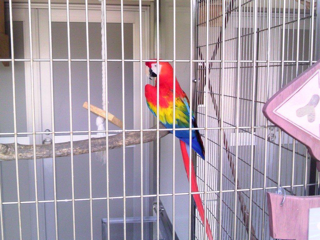 日本平動物園 ふれあい動物園 アカコンゴウインコ2