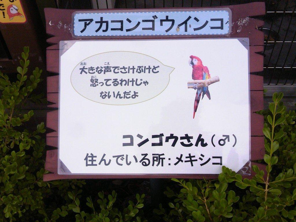 日本平動物園 ふれあい動物園 アカコンゴウインコ