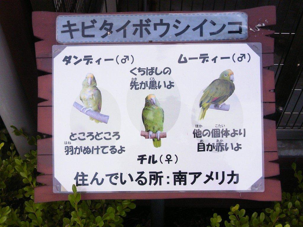 日本平動物園 ふれあい動物園 キビタイボウシインコ