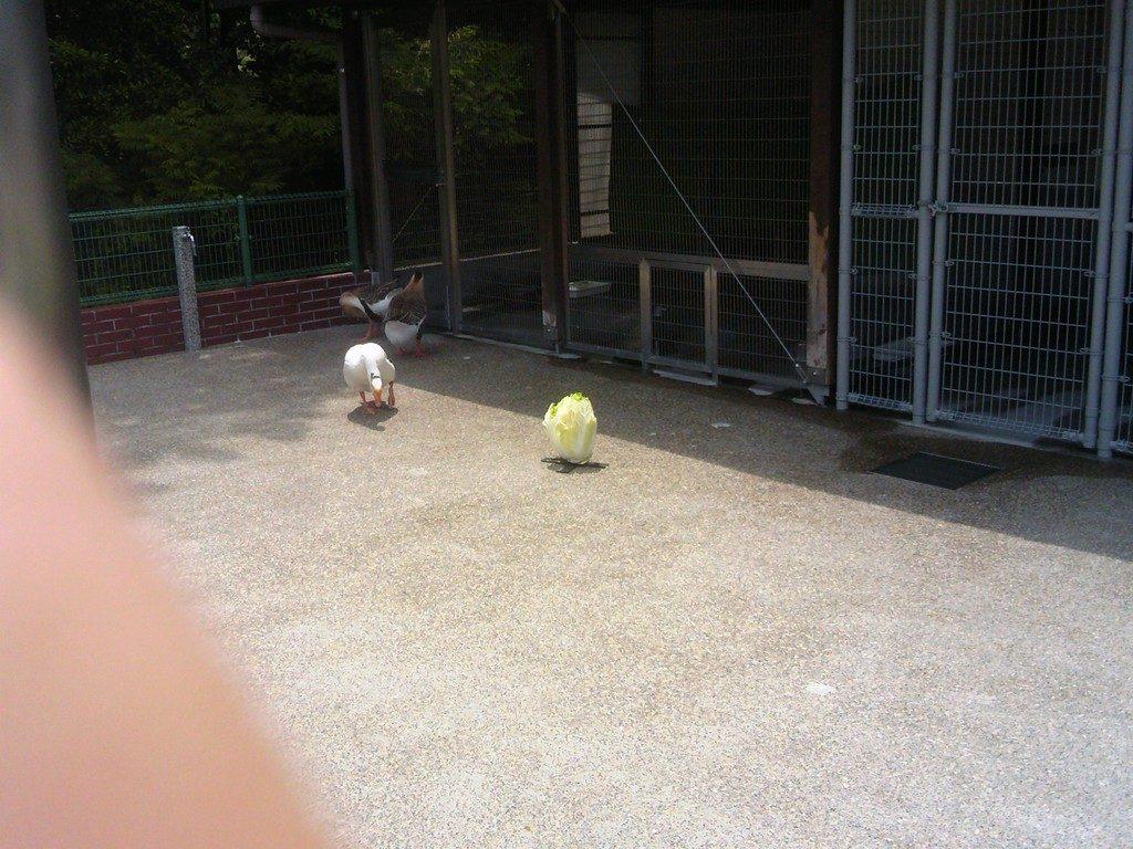 日本平動物園 ふれあい動物園 白菜