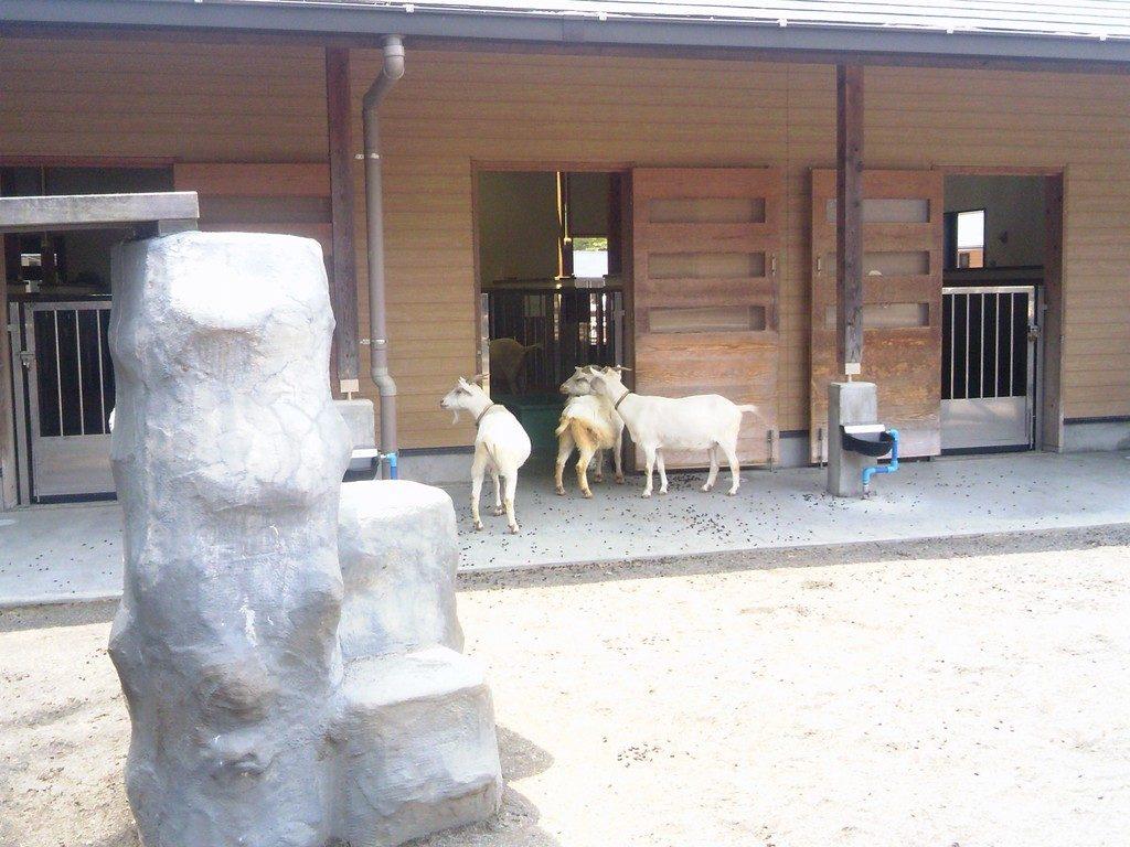 日本平動物園 ふれあい動物園 ヤギ5