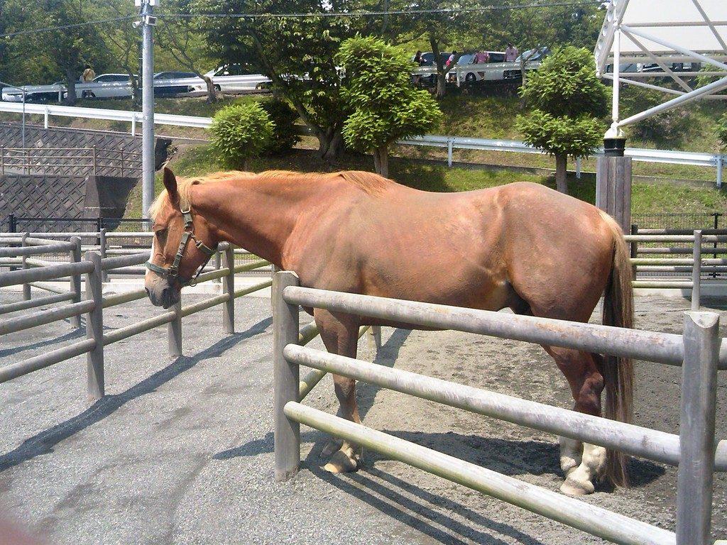日本平動物園 ふれあい動物園 馬