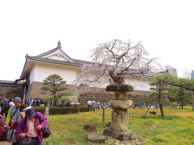 静岡まつり 駿府城公園の桜