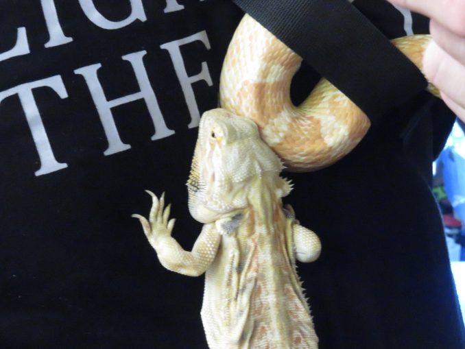静岡夏まつり夜店市 爬虫類