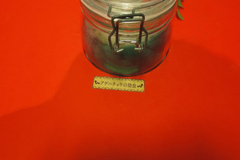 静岡パルコ におい展 昆虫がビックリした時に出すにおい アゲハチョウの幼虫